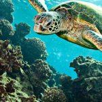 Muğla'nın Görmeniz Gereken Tatil Bölgeleri - dalyan kaplumbagalar
