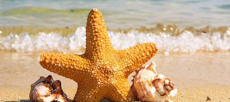 Erken Rezervasyon Yaptırarak Tatilinizi Ucuza Getirin - kibris denizi