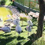 Anadolu'nun İncisi Eskişehir'in Gezi Rehberi - Hayvanat Bahçesi