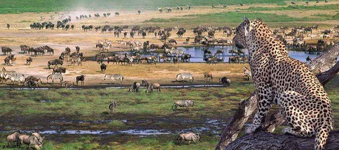 Afrika'da Safari Yerleri - Ngorongoro