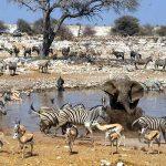 Afrika'da Safari Yerleri - Etosha Milli Parkı, Namibya