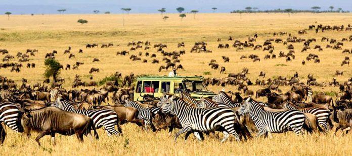Afrika'da Safari Yerleri - Kidepo Vadisi Milli Parkı