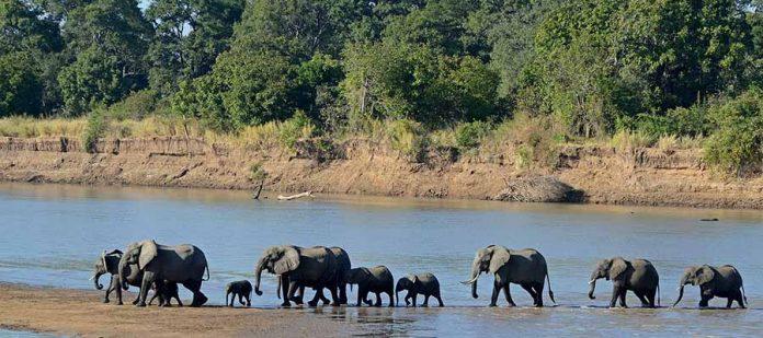Afrika'da Safari Yerleri - Güney Luangwa Milli Parkı