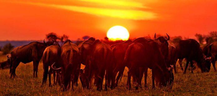 Afrika'da Safari Yerleri - Masai Mara Milli Parkı