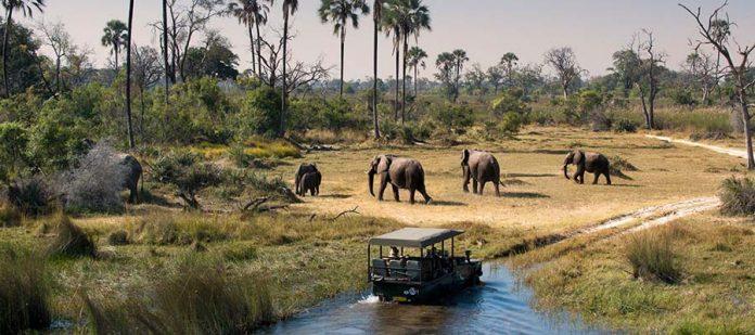 Afrika'da Safari Yerleri - Okavango Deltası