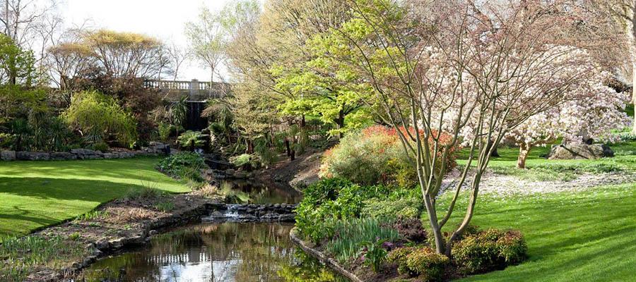 Dünyanın En Güzel Parkları - Hyde Park - Ağaçlar