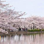 Dünyanın En Güzel Parkları - Ueno Park - Genel