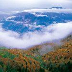 Türkiye'nin En İyi Trekking Yolları - Yenice Ormanları