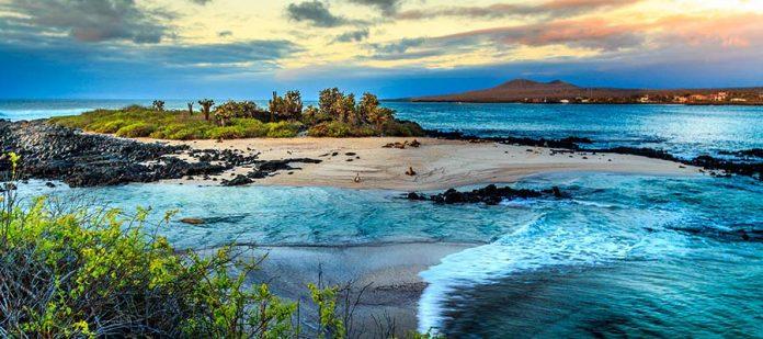 Galapagos - Genel